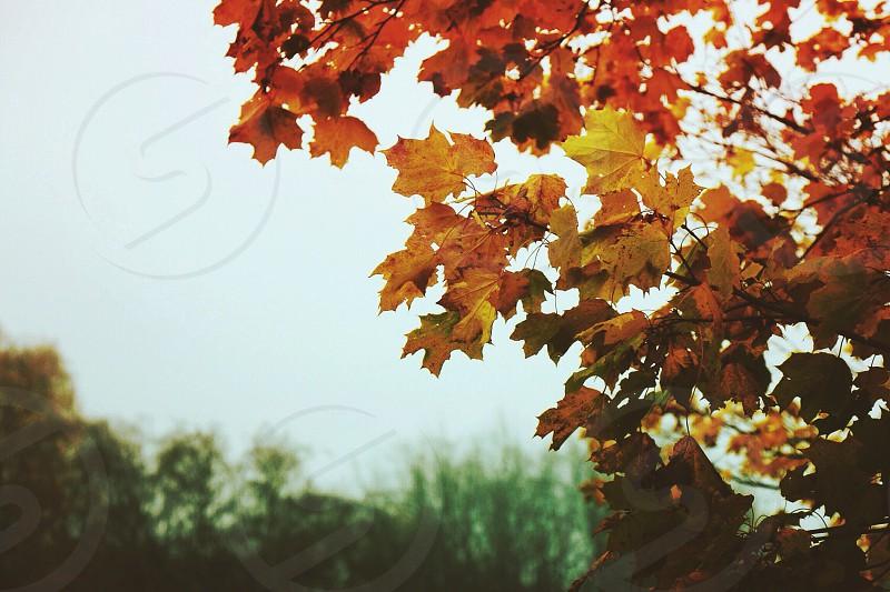 brown maple tree photo