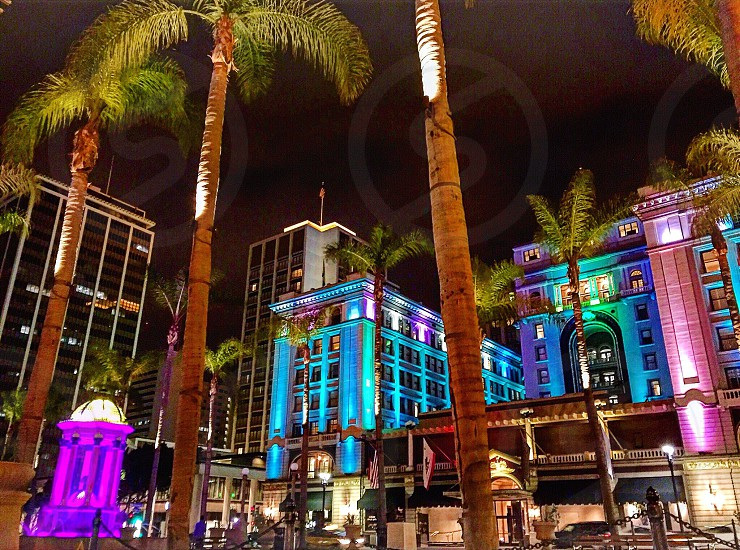 San Diego lights colors palm trees nighttime nights photo