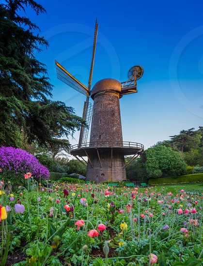 Spring windmill at Golden Gate Park photo