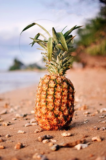 Pineapple on the beach of Hawaii photo