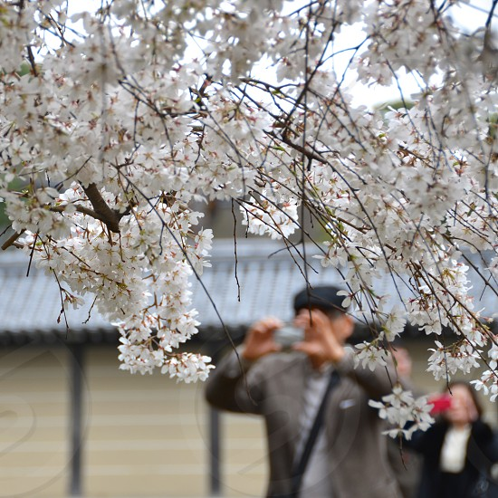 man taking picture of tree with white blossoms photo