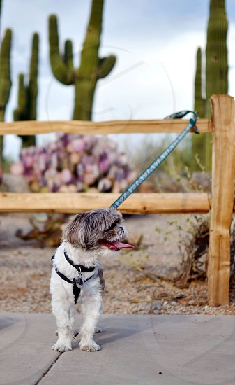 Dog outdoors in the desert photo