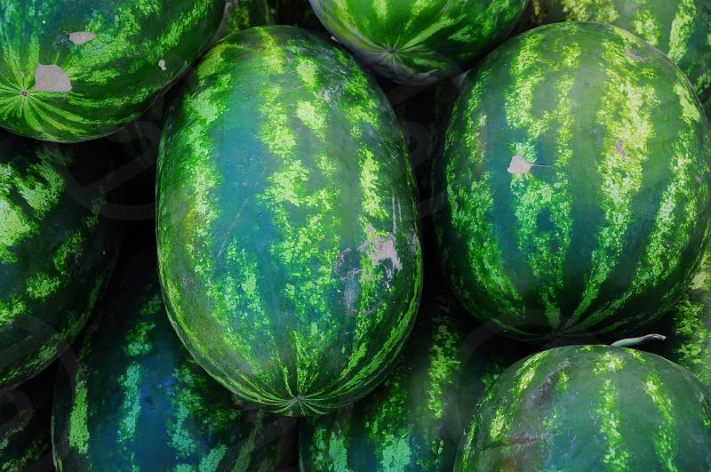 green watermelon fruit photo