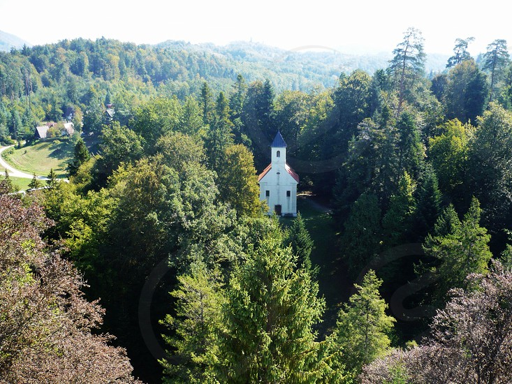 white church in the middle of the forest photo