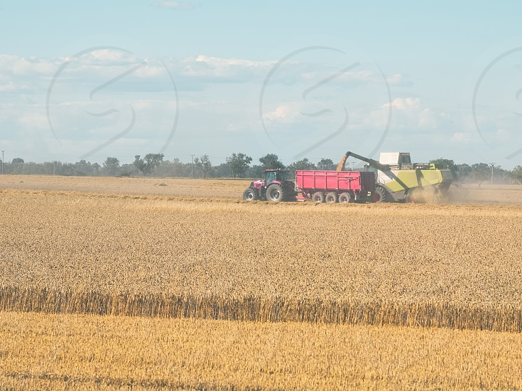 Wheat Harvesting with Combine Harvester on a Sunny Summer Day photo