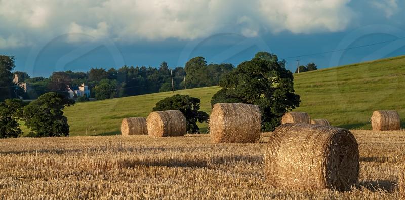 hay bales on feild photo