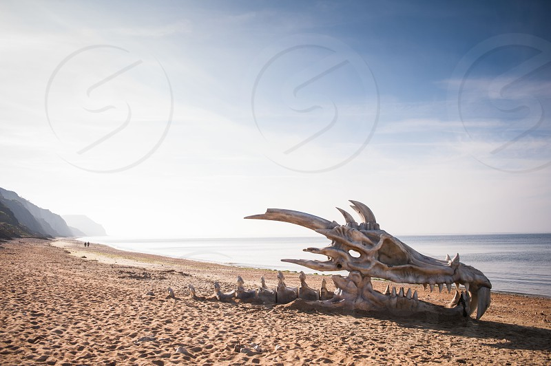 Skeletons dinosaurs south coast beach Jurassic coast dorset.  photo