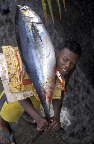 a men with a tuna fish in the city of Moutsamudu on the Island of Anjouan on the Comoros Ilands in the Indian Ocean in Africa.    photo