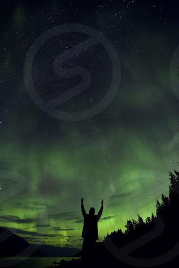 Canada aurora northern lights pines silhouette stars photo