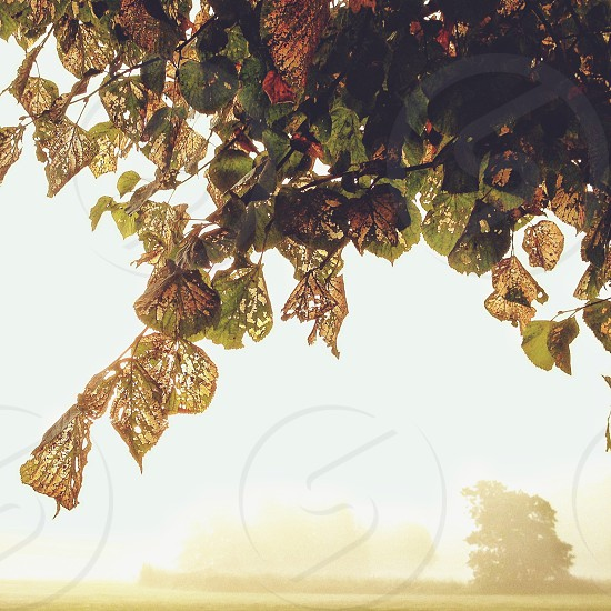 Autumn leaves in misty morning light photo