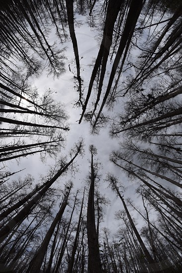 worm's eye view of silhouette of bare trees under cloudy sky photo