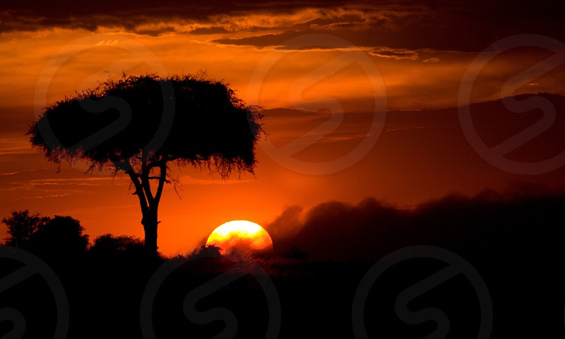 silhouette of tree on field during sunset photo