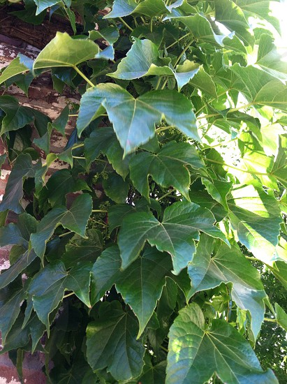 Green Plant Leaves photo
