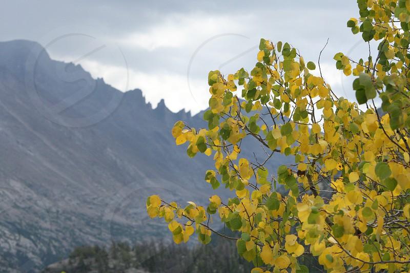 Colorado Aspens Rocky Mountains Fall photo