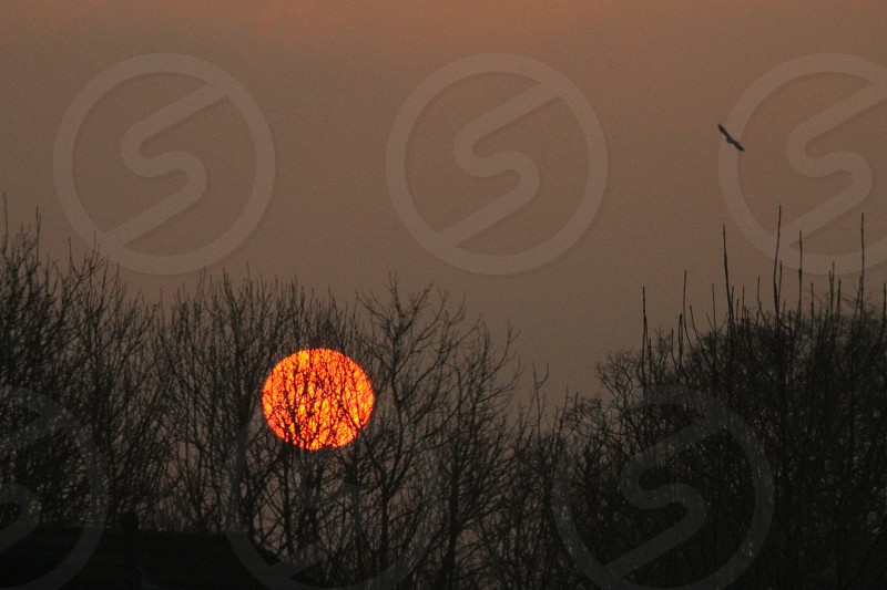 Ball of Fire January.... watching the sun go down over the trees photo