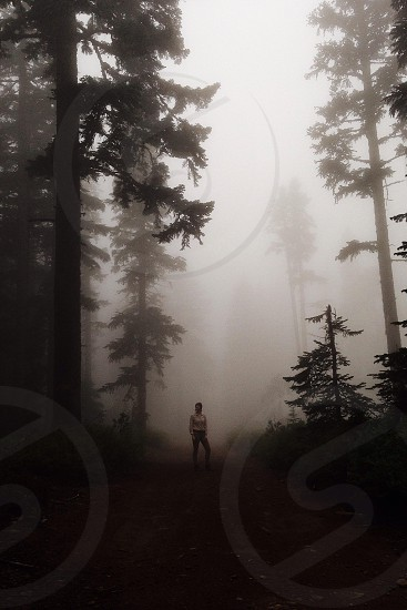 woman in grey long sleeved shirt standing on foggy forest photo