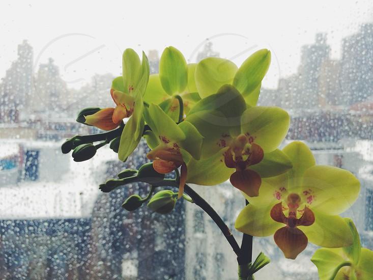 green flower plant photo