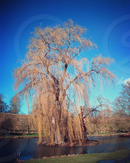 Spring Kent England Tree Willow lake castle photo