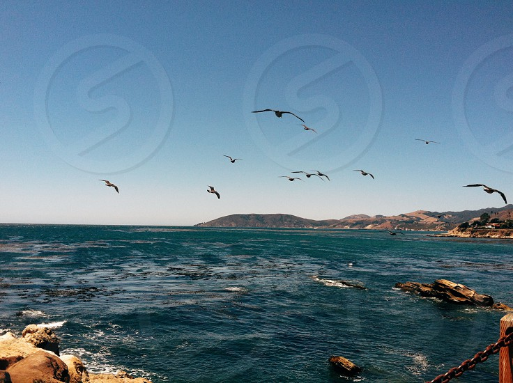 black flock of birds photography photo