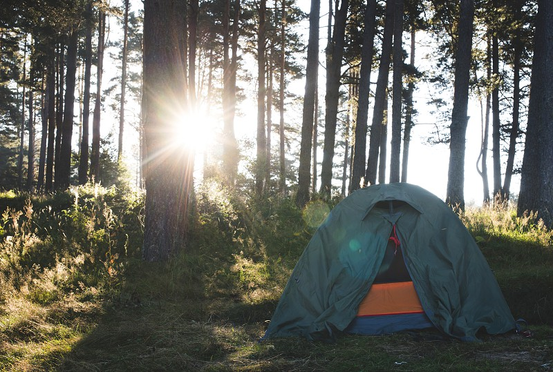 Tent in the forest on sunlight. Pine trees photo