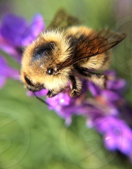 brown and black bee macro photography photo