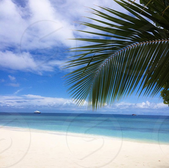 Maldives travel landscape nature tourism Arecaceae azure sky beach coast land outdoors palm tree plant sea shoreline sky summer tree tropical vacation district scenery photo