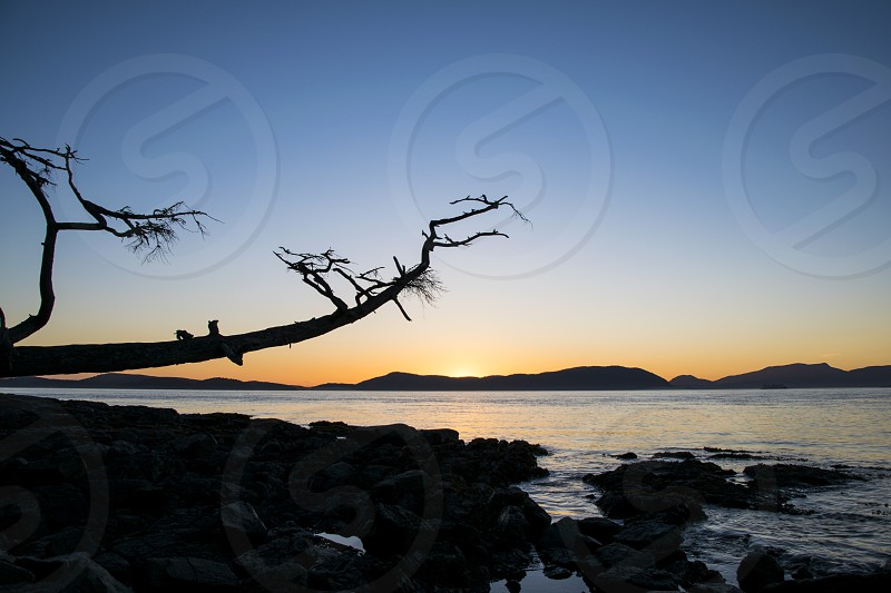silhouette of a tree twig photo near body of water photo during sunset photo