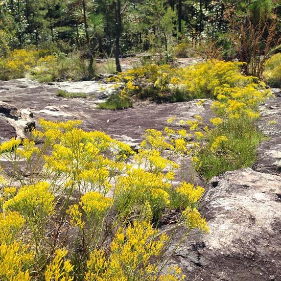 yellow and green wildflowers  photo