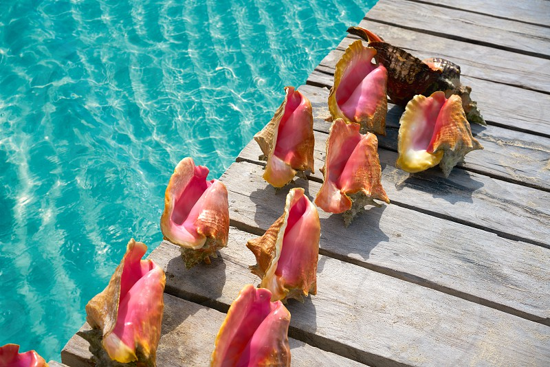 Caribbean seashells on a wooden pier over turquoise sea in Mexico photo