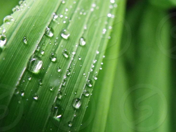 MACRO Raining raindrops on grass photo