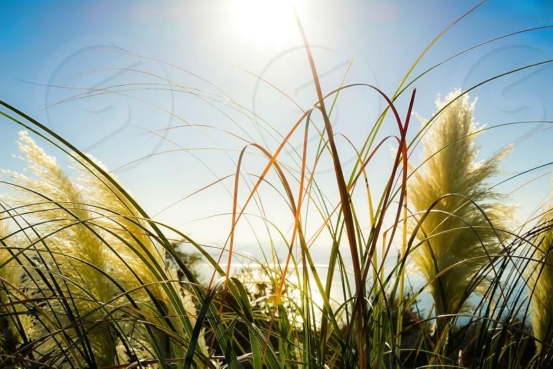 Vegetation in the sun. photo