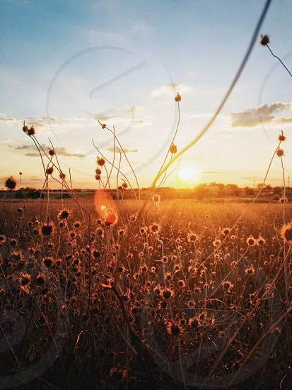 flower field sunrise photo photo