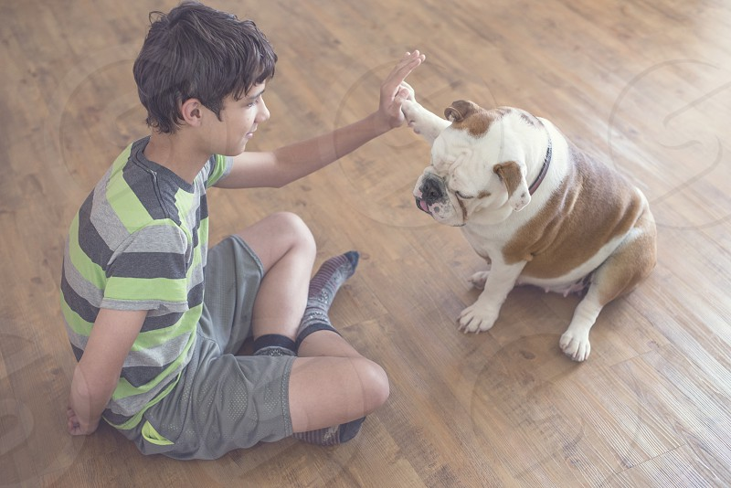 boy wearing a grey and green striped tee giving an american bulldog a high five while sitting on a hardwood floor photo
