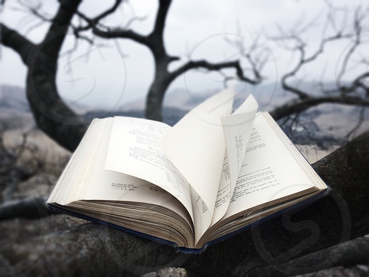 white book on black wooden bare tree during daytime photo