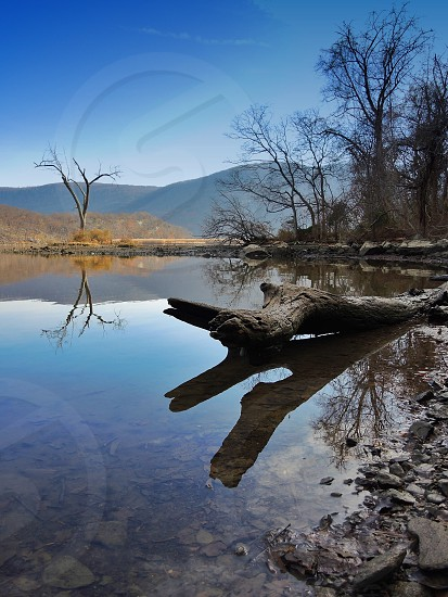 grey drift wood in clear shallow calm water with tall leafless trees in the background under blue sky during daytime photo