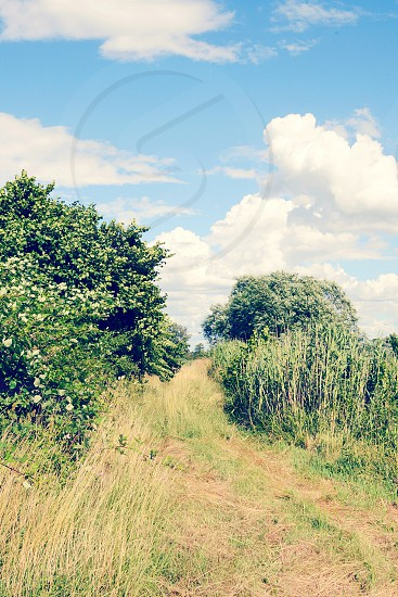 Meadown path through the landscape of Havel river with blackberry bushes and reed. Summertime. vintage retouch of image. photo