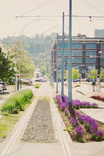 view of gray electrical posts and purple tulips along the way photo
