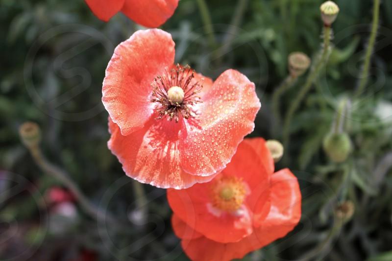 Flower garden gardening blossom spring summer wild photo