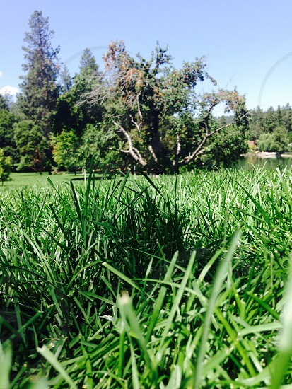 Lawn perspective  photo
