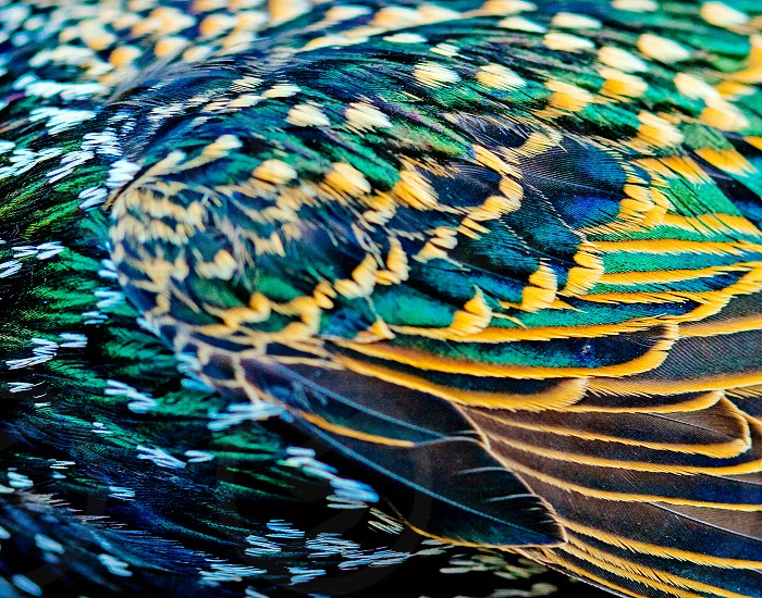 Starling wings photo