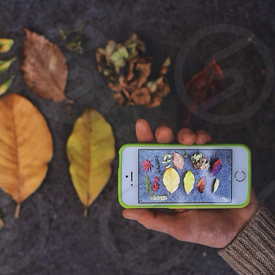 Fall; autumn; leaves; iphone; nature; color; botanical  photo