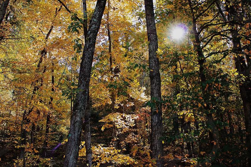 Sunshine through the fall colors - Charlottesville VA photo