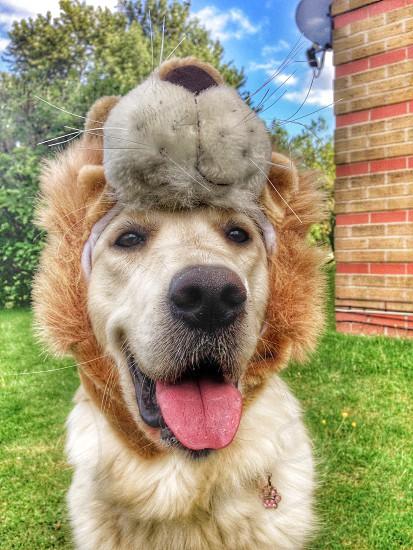 Zoe loves her new hat!  photo