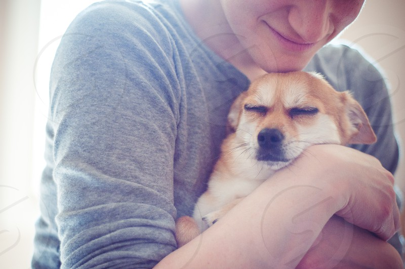 chihuahua small dog dog and owner love pet hug happiness family smile relationship comfort peace owner holding dog owner hugging dog happy dog pet animal cute photo