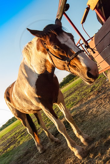 light dusk golden hour barn country shadows rustic old wagon horse photo