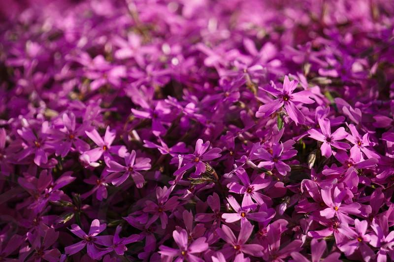 closeup photo of purple petaled flowers photo
