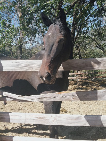 brown and black horse in the ranch photo