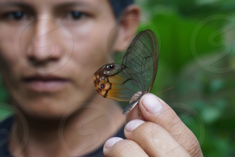 Bitterly macro insect travel bug photo