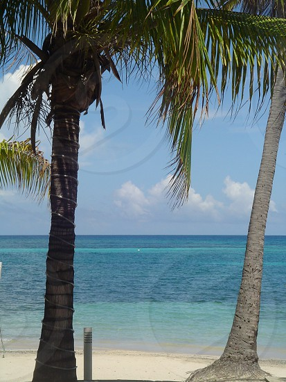 coconut tree beach view photo photo