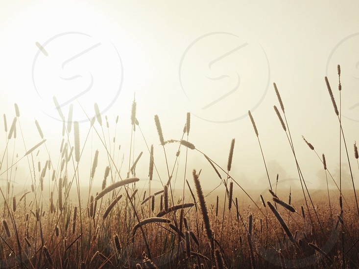 brown grass field under the sun photo